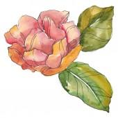 Vörös és lila camellia elszigetelt fehér. Akvarell háttér ábra elem.