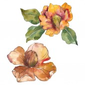 Isolated  orange camellia flowers with green leaves. Watercolor illustration set.