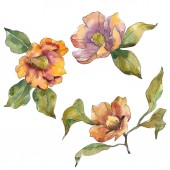Photo Isolated orange camellia flowers with green leaves. Watercolor illustration set.
