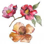 Isolated orange and red camellia flowers with green leaves. Watercolor illustration set.