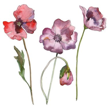 Purple red poppy floral botanical flower. Wild spring leaf isolated. Watercolor background illustration set. Watercolour drawing fashion aquarelle isolated. Isolated poppies illustration element. stock vector