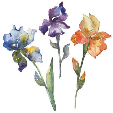 Blue, purple and orange irises. Floral botanical flower. Wild spring leaf isolated. Watercolor background illustration set. Watercolour drawing fashion aquarelle. Isolated iris illustration element.