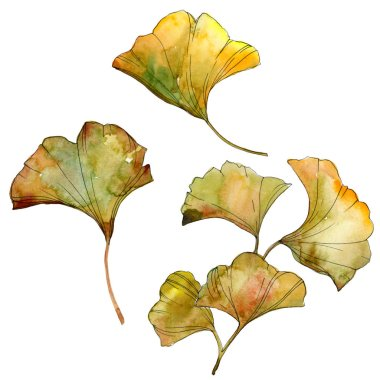Yellow and green ginkgo biloba isolated leaves. Watercolor background illustration set. stock vector