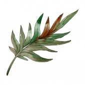 Fotografie Exotic tropical isolated green palm leaf. Watercolor drawn illustration element.