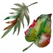 Exotické tropické Zelený strom palm beach listy džungle botanické. Sada akvarel pozadí obrázku. Akvarel výkresu módní aquarelle. Izolované listy ilustrace prvek
