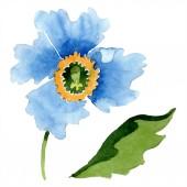 Fényképek Kék mák és a zöld levél akvarell illusztráció.