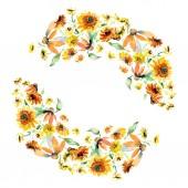 Žluté a oranžové květinové botanické květin kytice. Divoký jarní listové izolované. Sada akvarel pozadí obrázku. Akvarel výkresu módní aquarelle. Frame hranice ozdoba náměstí.