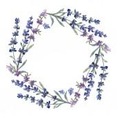 Fialové levandule. Květinové botanické květin. Divoký jarní listové wildflower izolován. Sada akvarel pozadí obrázku. Akvarel, samostatný výkresu módní aquarelle. Frame hranice ozdoba náměstí.