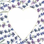 Levendula lila. Virágos botanikai virág. Vad tavaszi levél vadvirág elszigetelt. Akvarell háttér illusztráció készlet. Akvarell rajz divat aquarelle elszigetelt. Test határ Dísz tér.