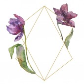 Purple tulip floral botanical flowers. Wild spring leaf wildflower isolated. Watercolor background illustration set. Watercolour drawing fashion aquarelle isolated. Frame border ornament square.