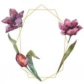 Lila tulipán virág botanikai virág. Vad tavaszi levél vadvirág elszigetelt. Akvarell háttér illusztráció készlet. Akvarell rajz divat aquarelle elszigetelt. Test határ Dísz tér