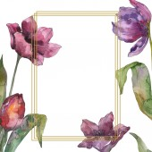 Fialová Tulipán květinové botanické květin. Divoký jarní listové wildflower izolován. Sada akvarel pozadí obrázku. Akvarel, samostatný výkresu módní aquarelle. Frame hranice ozdoba náměstí