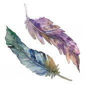Photo Bird feather from wing isolated. Watercolor background illustration set. Watercolour drawing fashion aquarelle isolated. Isolated feathers illustration element.