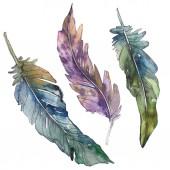 Fotografie Ptačí pírko z křídla, samostatný. Sada akvarel pozadí obrázku. Akvarel, samostatný výkresu módní aquarelle. Prvek ilustrace izolované peří