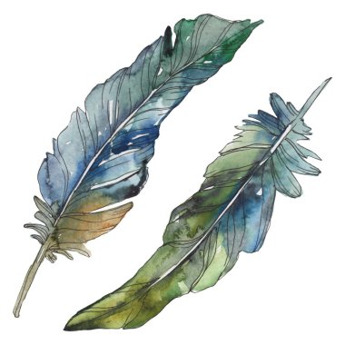 Bird feather from wing isolated. Watercolor background illustration set. Watercolour drawing fashion aquarelle isolated. Isolated feathers illustration element. stock vector