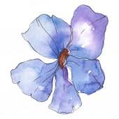 Kék, lila len. Virágos botanikai virág. Vad tavaszi levél vadvirág elszigetelt. Akvarell háttér illusztráció készlet. Akvarell rajz divat aquarelle. Elszigetelt len ábra elem.