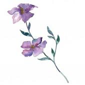 Kék és lila len virágos botanikai virág. Vad tavaszi levél vadvirág elszigetelt. Akvarell háttér illusztráció készlet. Akvarell rajz divat aquarelle. Elszigetelt len ábra elem.