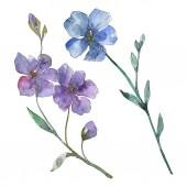Modré a fialové lnu květinové botanické květin. Divoký jarní listové wildflower izolován. Sada akvarel pozadí obrázku. Akvarel výkresu módní aquarelle. Izolované lnu ilustrace prvek.