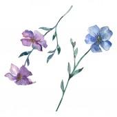 Modré a fialové lnu květinové botanické květin. Divoký jarní listové wildflower izolován. Sada akvarel pozadí obrázku. Akvarel výkresu módní aquarelle. Izolované lnu ilustrace prvek