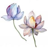 blaue und violette Lotusblüten. Aquarell Hintergrundillustration Set. isolierte Lotusblumen Illustrationselemente.