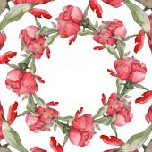 Piros pünkösdi rózsa akvarell háttér illusztráció készlet elszigetelt fehér. Test határ dísz