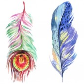 Színes madár toll szárny elszigetelt. Az Aquarelle toll háttér. Akvarell illusztráció készlet. Akvarell rajz divat aquarelle elszigetelt. Elszigetelt toll ábra elem