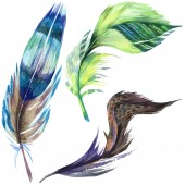 Photo Colorful bird feather from wing isolated. Aquarelle feather for background. Watercolor illustration set. Watercolour drawing fashion aquarelle isolated. Isolated feather illustration element.