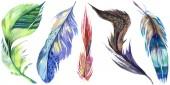 Színes madár toll szárny elszigetelt. Az Aquarelle toll háttér. Akvarell illusztráció készlet. Akvarell rajz divat aquarelle elszigetelt. Elszigetelt toll ábra elem.