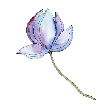 Blue and purple lotus flower. Watercolor background illustration isolated element.
