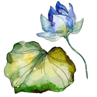 Blue and purple lotus flower with green leaf. Watercolor isolated illustration elements.