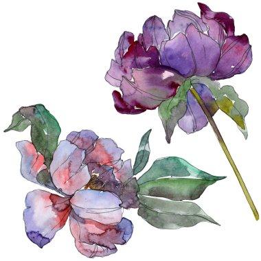 Purple peonies. Watercolor background set. Isolated peonies illustration elements.