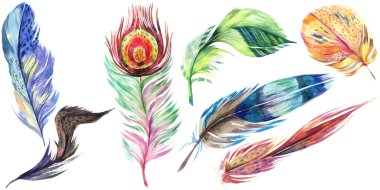 Colorful bird feather from wing isolated. Aquarelle feather for background. Watercolor illustration set. Watercolour drawing fashion aquarelle isolated. Isolated feather illustration element. stock vector