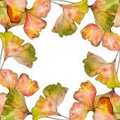 Zöld sárga ginkgo biloba levél. Leveles növény botanikus kert virágos lombozat. Akvarell háttér illusztráció készlet. Akvarell rajz divat aquarelle elszigetelt. Test határ Dísz tér.