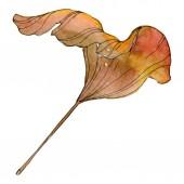 Green yellow ginkgo biloba leaf. Leaf plant botanical garden foliage. Watercolor background illustration set. Watercolour drawing fashion aquarelle isolated. Isolated ginkgo illustration element.