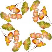 Fotografie Zelená žlutá Ginko biloba list. Listy rostlin Botanická zahrada květinové listy. Sada akvarel pozadí obrázku. Akvarel, samostatný výkresu módní aquarelle. Frame hranice ozdoba náměstí