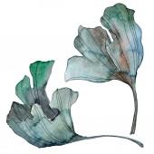 Ginkgo biloba leaf. Leaf plant botanical garden floral foliage. Watercolor background illustration set. Watercolour drawing fashion aquarelle isolated. Isolated ginkgo illustration element.