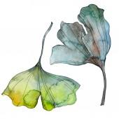 Ginkgo biloba levél. Leveles növény botanikus kert virágos lombozat. Akvarell háttér illusztráció készlet. Akvarell rajz divat aquarelle elszigetelt. Elszigetelt ginkgo ábra elem.