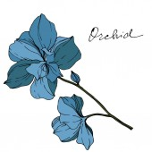 Vector blue orchids with orchid lettering isolated on white. Engraved ink art.