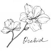 Vektor monochromatický orchideje s orchidejí nápis izolované na bílém. Ryté inkoust umění.