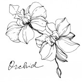 Fotografie Vector monochrome orchids with orchid lettering isolated on white. Engraved ink art.