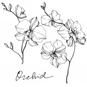 Vektor monochromatický orchideje s orchidejí nápis izolované na bílém. Ryté inkoust umění