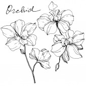 Vector monochrome orchids with orchid lettering isolated on white. Engraved ink art.