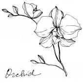 Vektor monochrom Orchideen mit Orchideenschrift isoliert auf weiß. Tuschebilder.