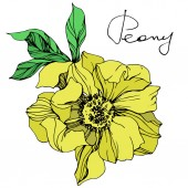 Fotografie Vector yellow isolated peony flower with green leaves and handwritten lettering on white background. Engraved ink art.