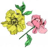 Vektor elszigetelt rózsaszín és sárga pünkösdi rózsa, zöld levelek és a kézzel írt bazsarózsa betűkkel fehér alapon. Vésett tinta art.