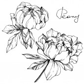 Fotografie Vector isolated monochrome peony flowers sketch and handwritten lettering on white background. Engraved ink art.