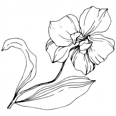 Vector monochrome orchid with leaves isolated on white. Engraved ink art. clip art vector