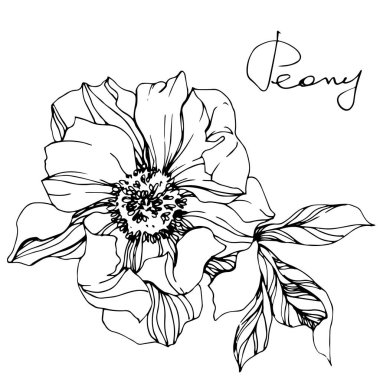 Vector isolated monochrome peony flower sketch and handwritten lettering on white background. Engraved ink art. clip art vector