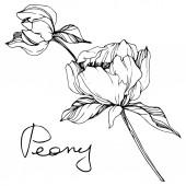 Fotografie Vektor izolované monochromatický Pivoňka květ skica a ručně psané písmo na bílém pozadí. Ryté inkoust umění