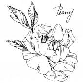 Vektor izolované monochromatický Pivoňka květ skica a ručně psané písmo na bílém pozadí. Ryté inkoust umění